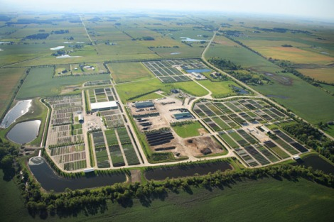 Midwest's new facility is divided into discreet growing areas, which limits vehicle travel. Courtesy Midwest Groundcovers.
